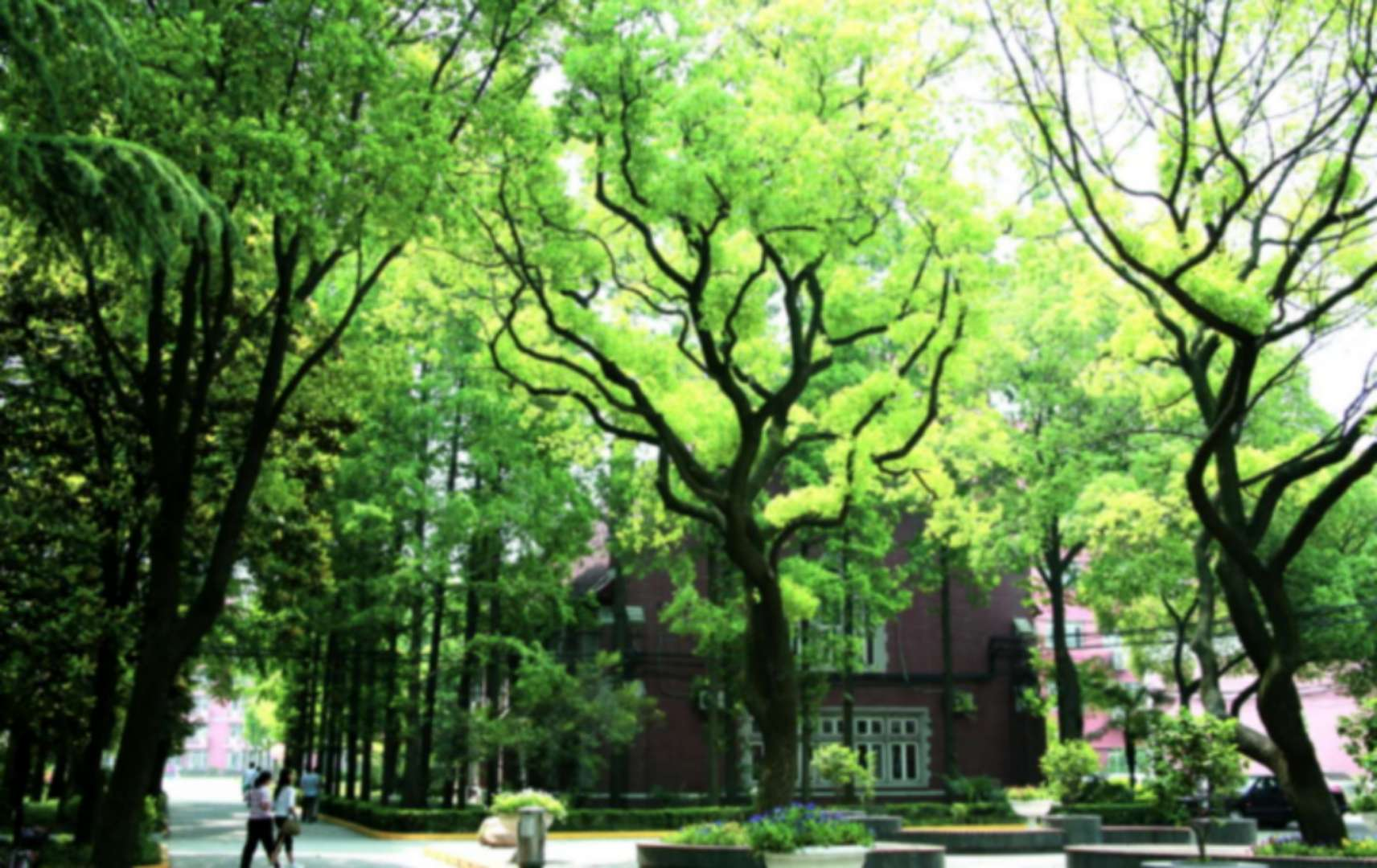 University-of-Shanghai-For-Science-And-Technology-tree