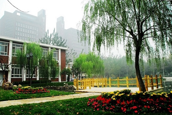 Willow-of-Tianjin-University-of-science-and-technology