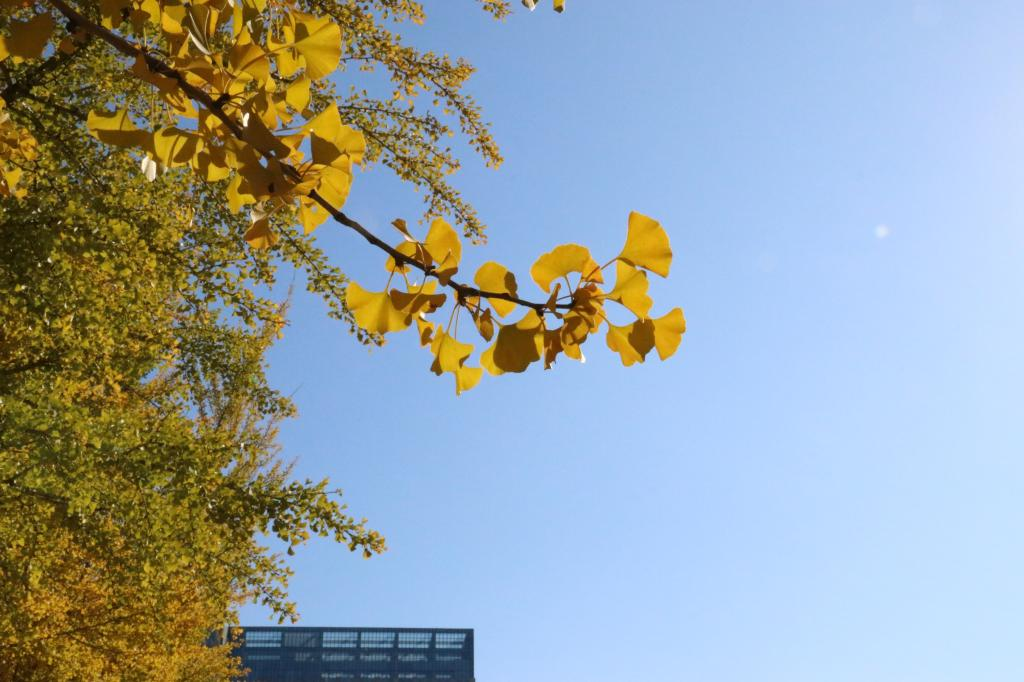 Liaoning-University-leaves