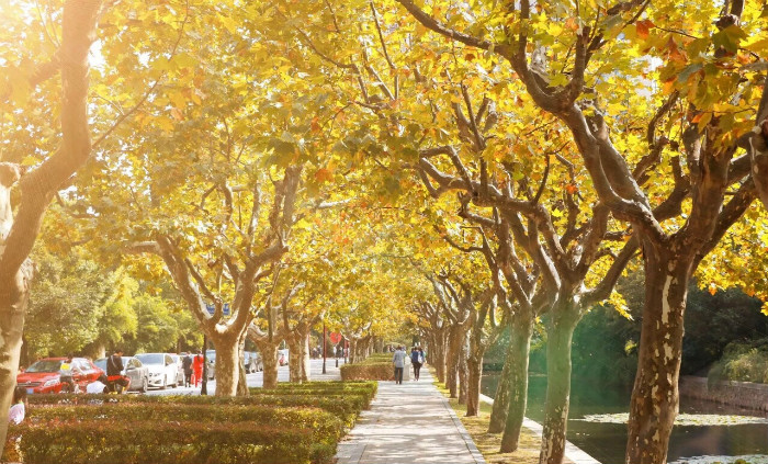 Autumn-scenery-of-East-China-Normal-University