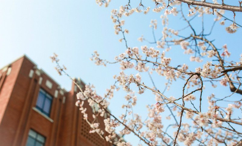 Spring-scenery-of-East-China-Normal-University
